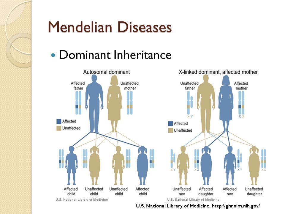 Mendelian Diseases Dominant Inheritance U.S. National Library of Medicine. http://ghr.nlm.nih.gov/