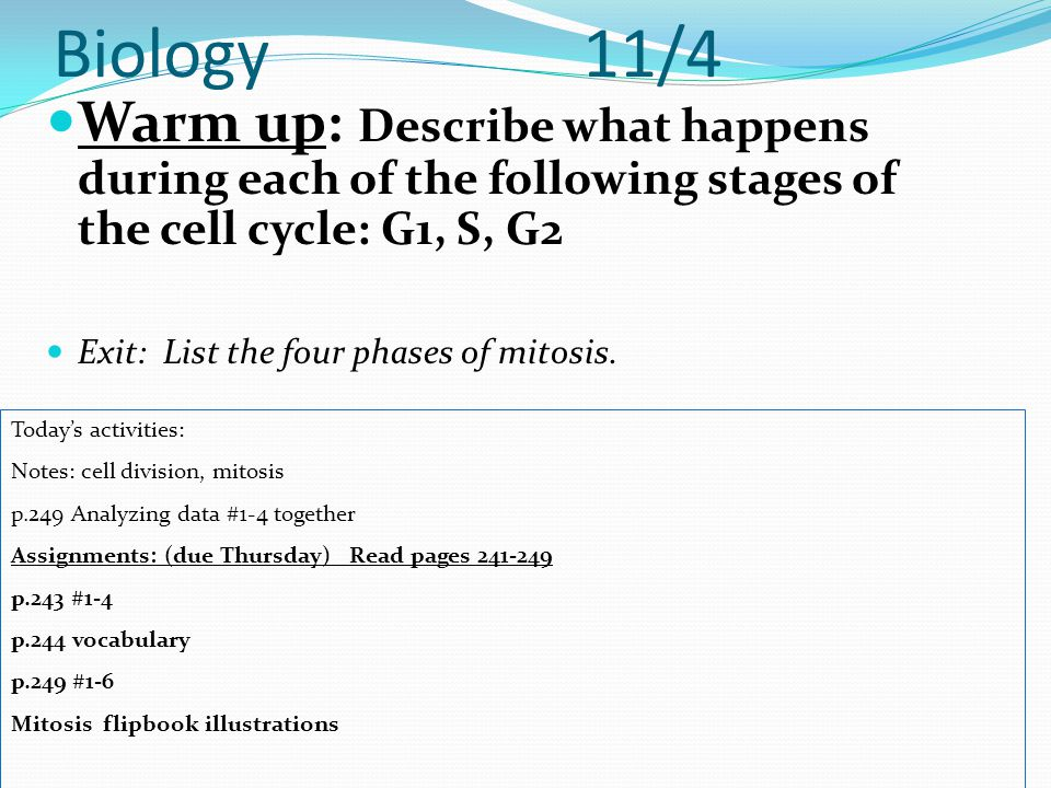Biology 11/4 Warm up: Describe what happens during each of the following stages of the cell cycle: G1, S, G2 Exit: List the four phases of mitosis. To