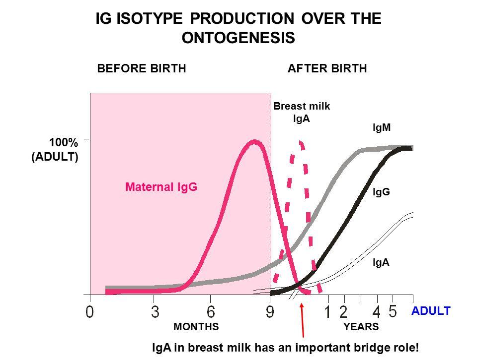 BEFORE BIRTHAFTER BIRTH Breast milk IgA IgM IgG IgA ADULT YEARSMONTHS Maternal IgG IG ISOTYPE PRODUCTION OVER THE ONTOGENESIS 100% (ADULT) IgA in brea