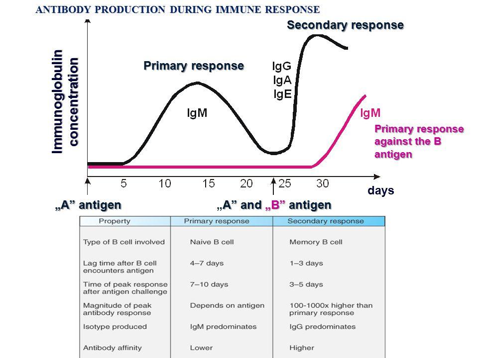 "Primary response against the B antigen Primary response Secondary response A"" and ""B"" antigen ""A"" and ""B"" antigen ""A"" antigen days Immunoglobulin conc"