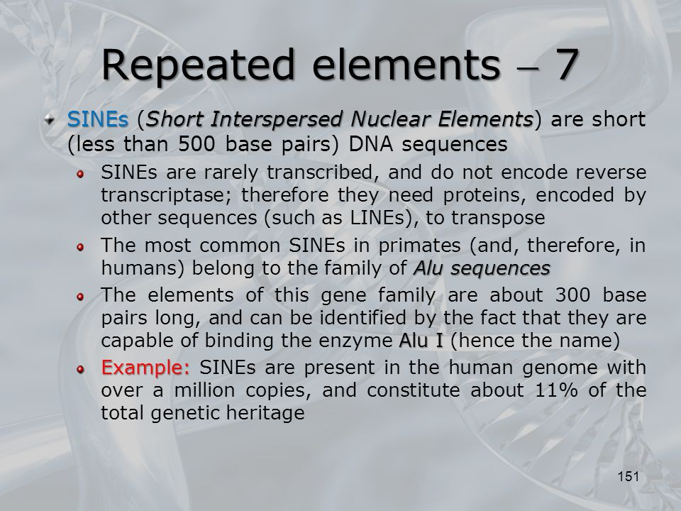 151 SINEsShort Interspersed Nuclear Elements SINEs (Short Interspersed Nuclear Elements) are short (less than 500 base pairs) DNA sequences SINEs are