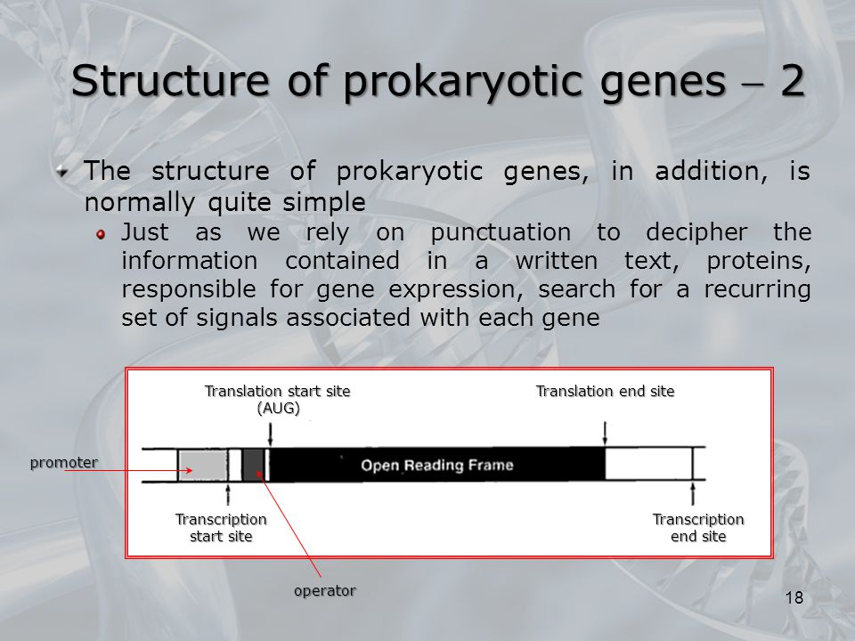 The structure of prokaryotic genes, in addition, is normally quite simple Just as we rely on punctuation to decipher the information contained in a wr