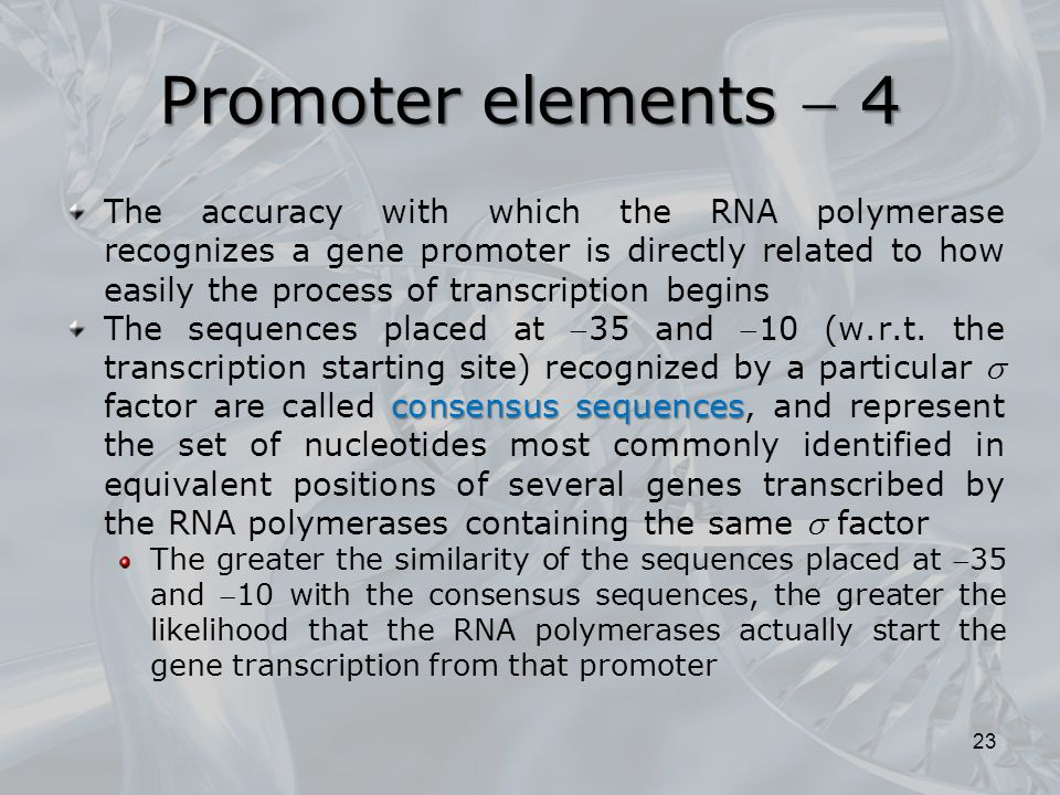 The accuracy with which the RNA polymerase recognizes a gene promoter is directly related to how easily the process of transcription begins consensus