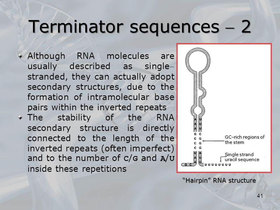 Although RNA molecules are usually described as single stranded, they can actually adopt secondary structures, due to the formation of intramolecular