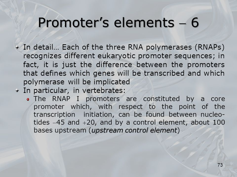 In detail… Each of the three RNA polymerases (RNAPs) recognizes different eukaryotic promoter sequences; in fact, it is just the difference between th