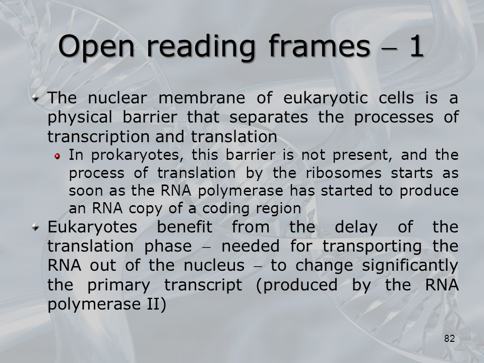 Open reading frames  1 The nuclear membrane of eukaryotic cells is a physical barrier that separates the processes of transcription and translation I