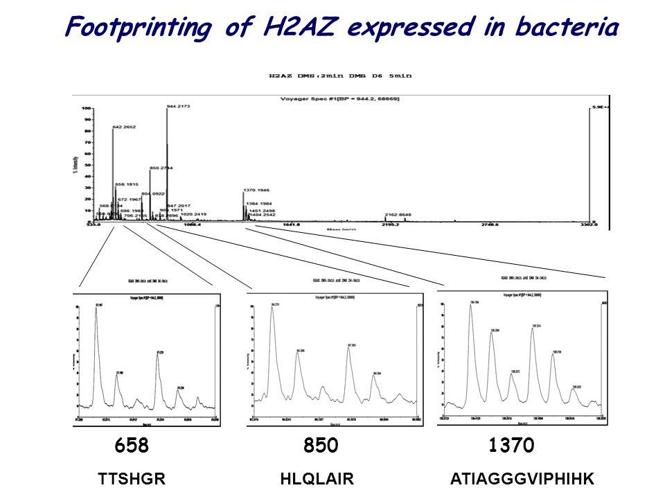 Footprinting of H2AZ expressed in bacteria 1370850 658 TTSHGRHLQLAIRATIAGGGVIPHIHK