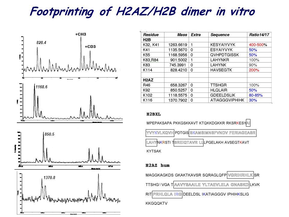 828.4 1168.6 850.5 1370.8 +CH3 +CD3 Footprinting of H2AZ/H2B dimer in vitro