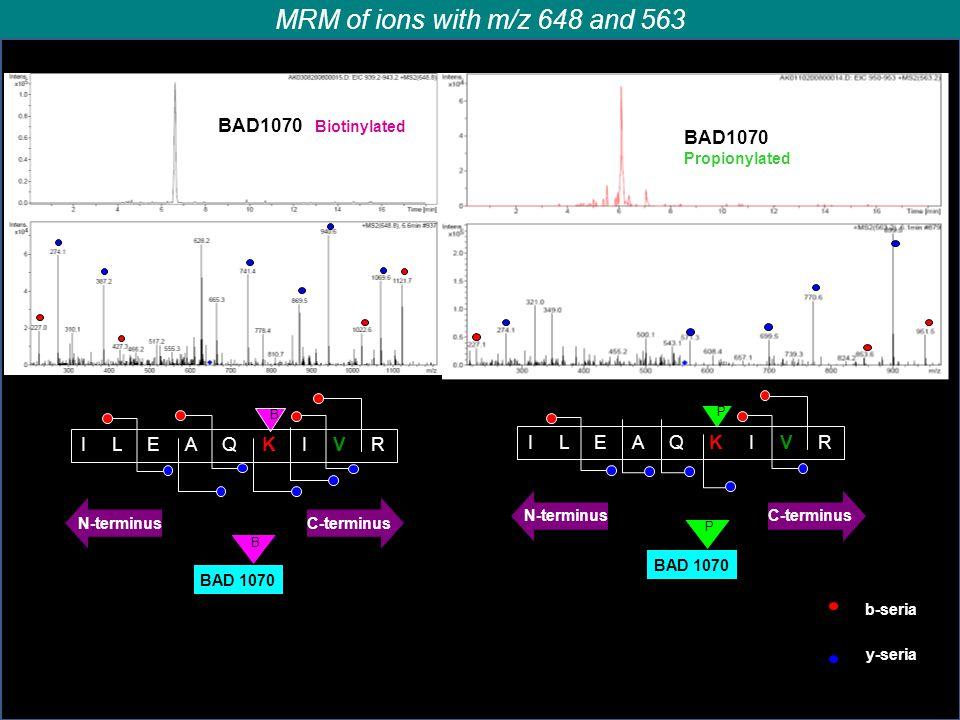 BAD1070 Biotinylated b-seria y-seria B I L E A Q K I V R BAD1070 Propionylated P I L E A Q K I V R N-terminusС-terminus B BAD 1070 Р N-terminusС-termi
