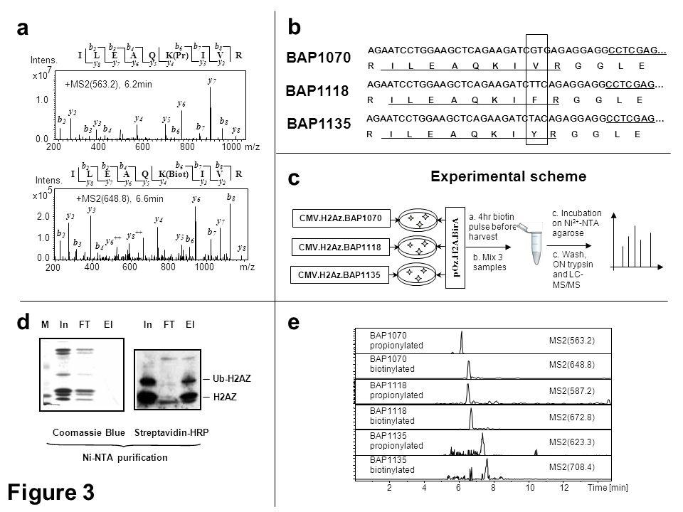 Figure 3 d Coomassie BlueStreptavidin-HRP InFTElInFTElM H2AZ Ub-H2AZ Ni-NTA purification AGAATCCTGGAAGCTCAGAAGATCGTGAGAGGAGGCCTCGAG… R I L E A Q K I V