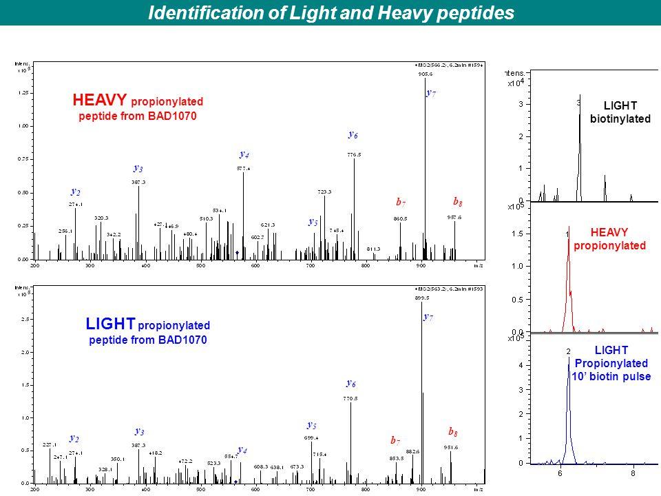 LIGHT propionylated peptide from BAD1070 HEAVY propionylated peptide from BAD1070 HEAVY propionylated LIGHT Propionylated 10' biotin pulse LIGHT bioti