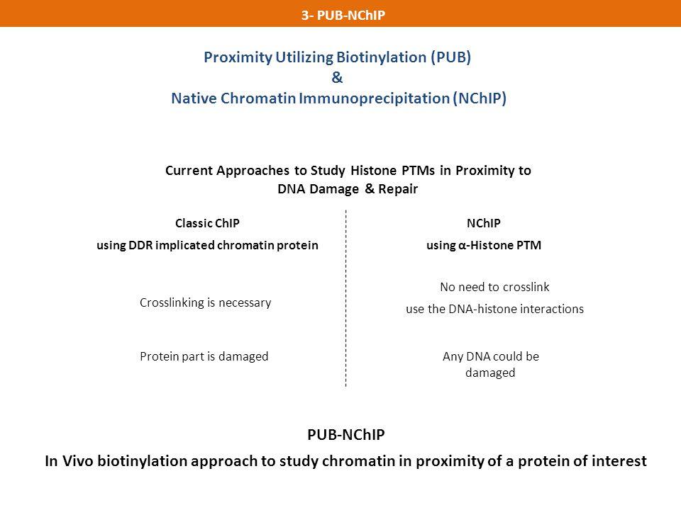 Proximity Utilizing Biotinylation (PUB) & Native Chromatin Immunoprecipitation (NChIP) 3- PUB-NChIP NChIP using α-Histone PTM No need to crosslink use