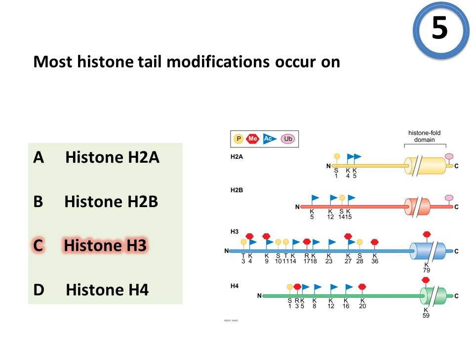 Most histone tail modifications occur on 5