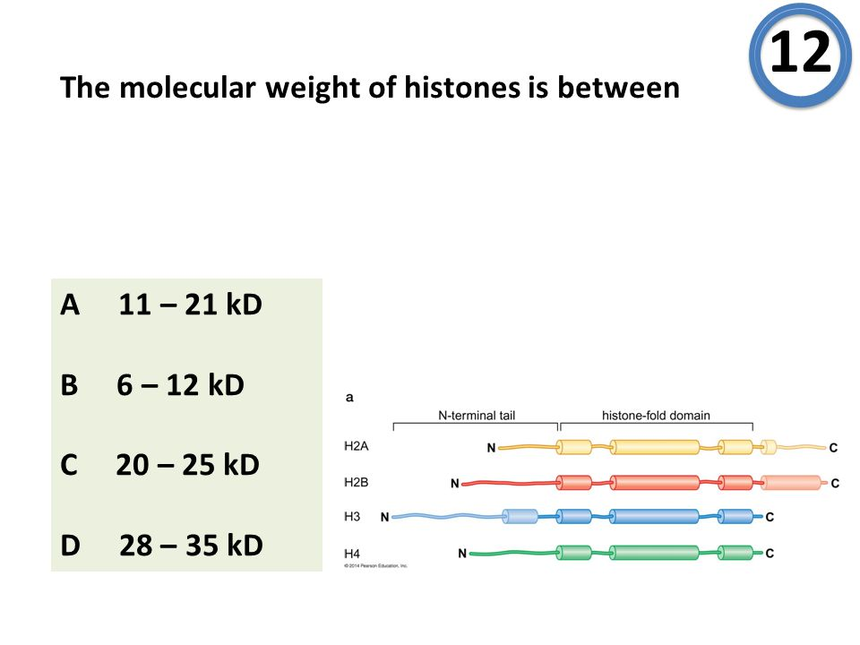 The molecular weight of histones is between 12 A 11 – 21 kD B 6 – 12 kD C 20 – 25 kD D 28 – 35 kD