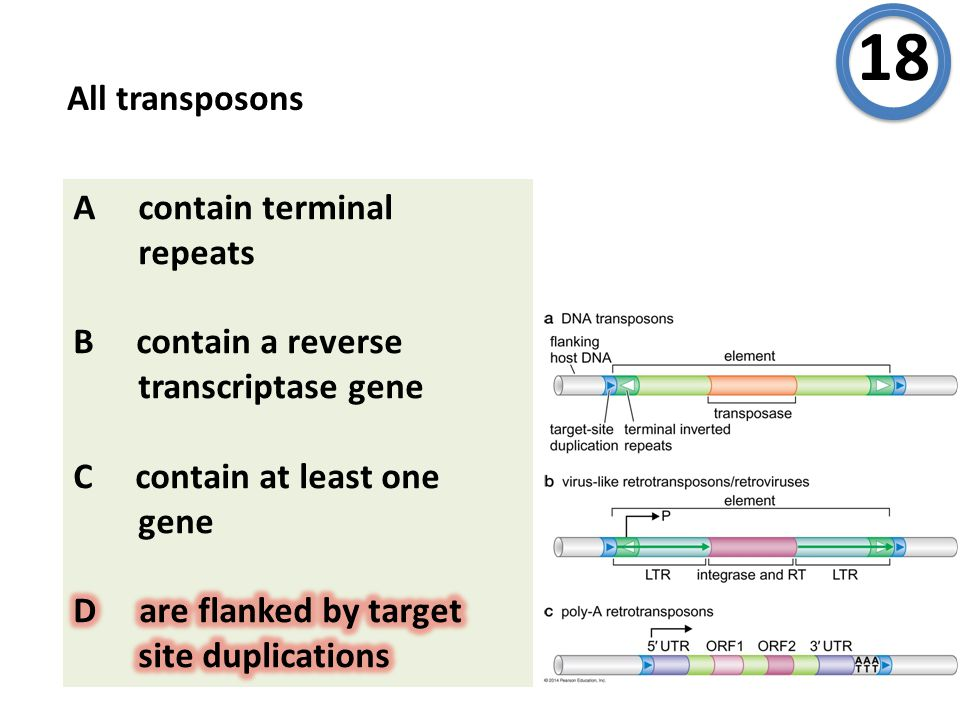 All transposons 18