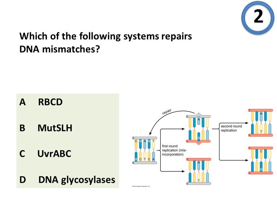 Which of the following systems repairs DNA mismatches.
