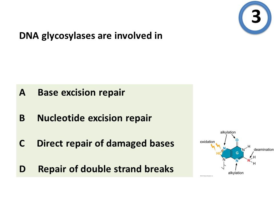 DNA glycosylases are involved in 3