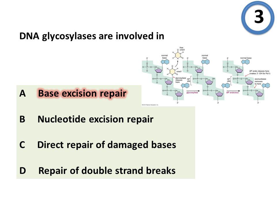 Which protein initiates homologous recombination in meiosis? A Spo11 B Dmc1 C MRX D Rad51 9