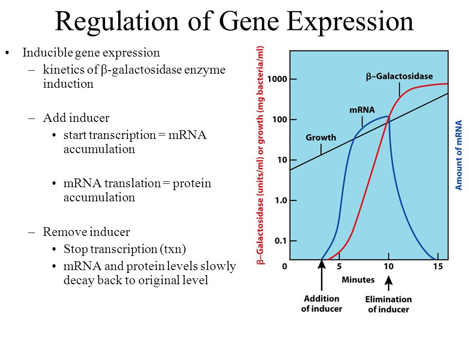 Regulation of Gene Expression Inducible gene expression –kinetics of β-galactosidase enzyme induction –Add inducer start transcription = mRNA accumulation mRNA translation = protein accumulation –Remove inducer Stop transcription (txn) mRNA and protein levels slowly decay back to original level