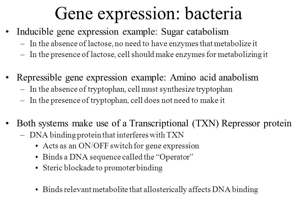 Gene expression: bacteria Inducible gene expression example: Sugar catabolism –In the absence of lactose, no need to have enzymes that metabolize it –In the presence of lactose, cell should make enzymes for metabolizing it Repressible gene expression example: Amino acid anabolism –In the absence of tryptophan, cell must synthesize tryptophan –In the presence of tryptophan, cell does not need to make it Both systems make use of a Transcriptional (TXN) Repressor protein –DNA binding protein that interferes with TXN Acts as an ON/OFF switch for gene expression Binds a DNA sequence called the Operator Steric blockade to promoter binding Binds relevant metabolite that allosterically affects DNA binding