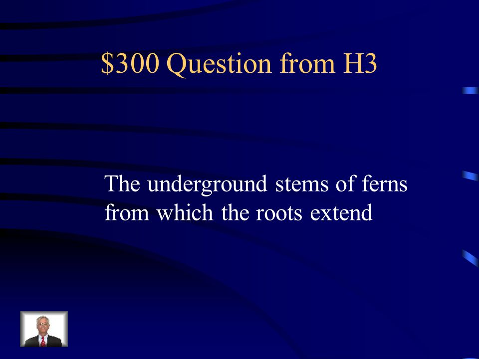 $200 Answer from H3 What is a frond