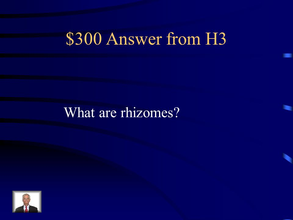 $300 Question from H3 The underground stems of ferns from which the roots extend