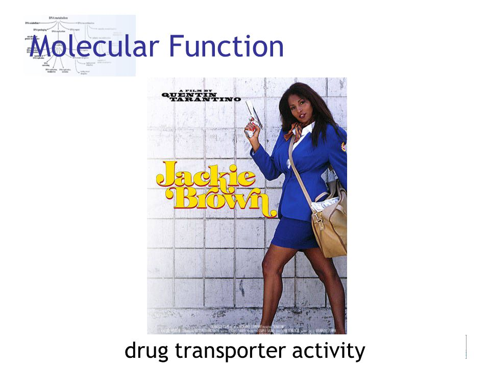 25th June 2007 Jane Lomax Molecular Function drug transporter activity