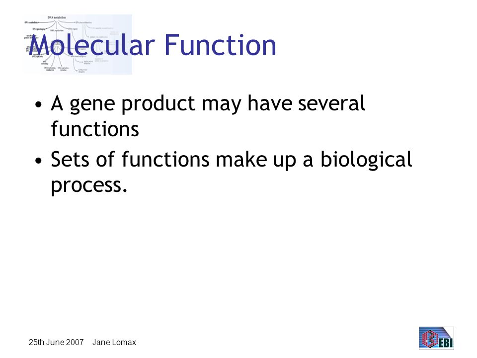25th June 2007 Jane Lomax Molecular Function A gene product may have several functions Sets of functions make up a biological process.