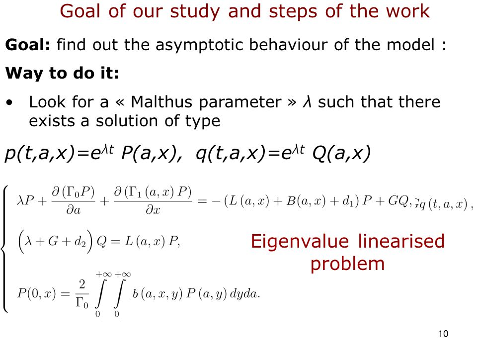 10 Goal: find out the asymptotic behaviour of the model : Way to do it: Look for a « Malthus parameter » λ such that there exists a solution of type p(t,a,x)=e λt P(a,x),q(t,a,x)=e λt Q(a,x) Goal of our study and steps of the work Eigenvalue linearised problem