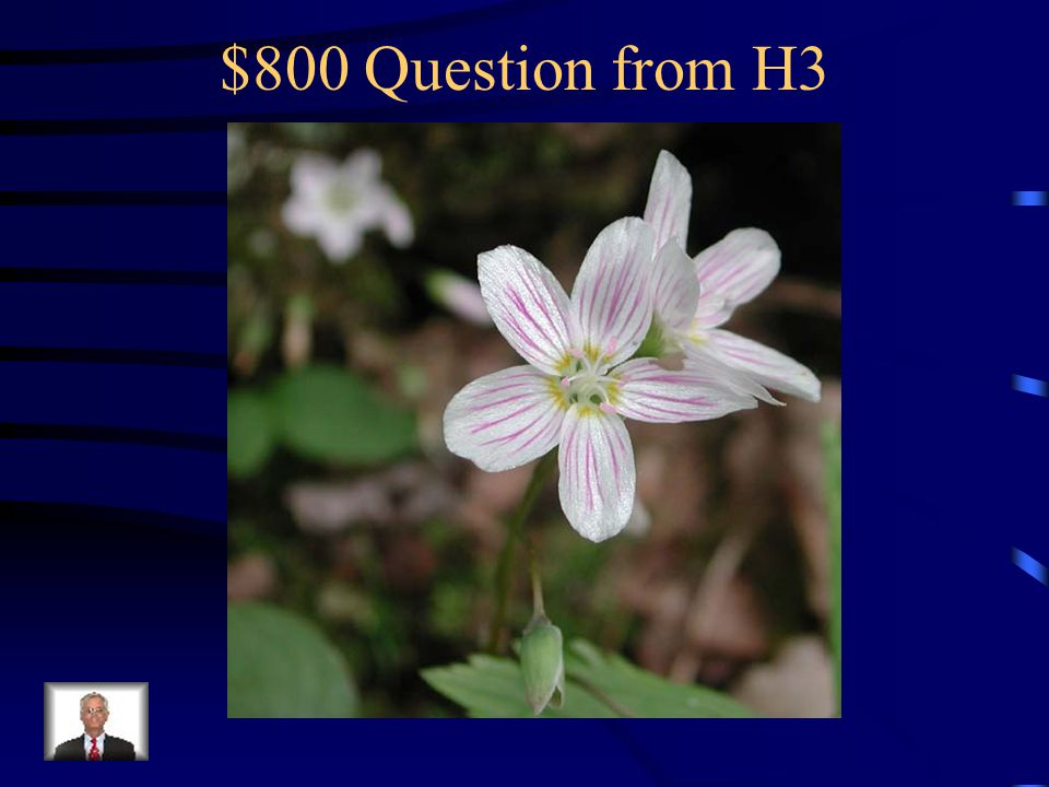 $600 Answer from H3 What is sticky geranium?