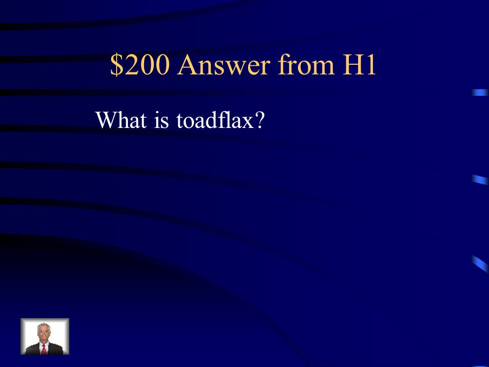 $200 Answer from H4 What is pineappleweed?