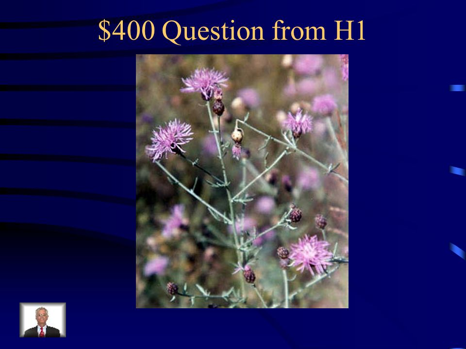 $200 Answer from H1 What is toadflax?