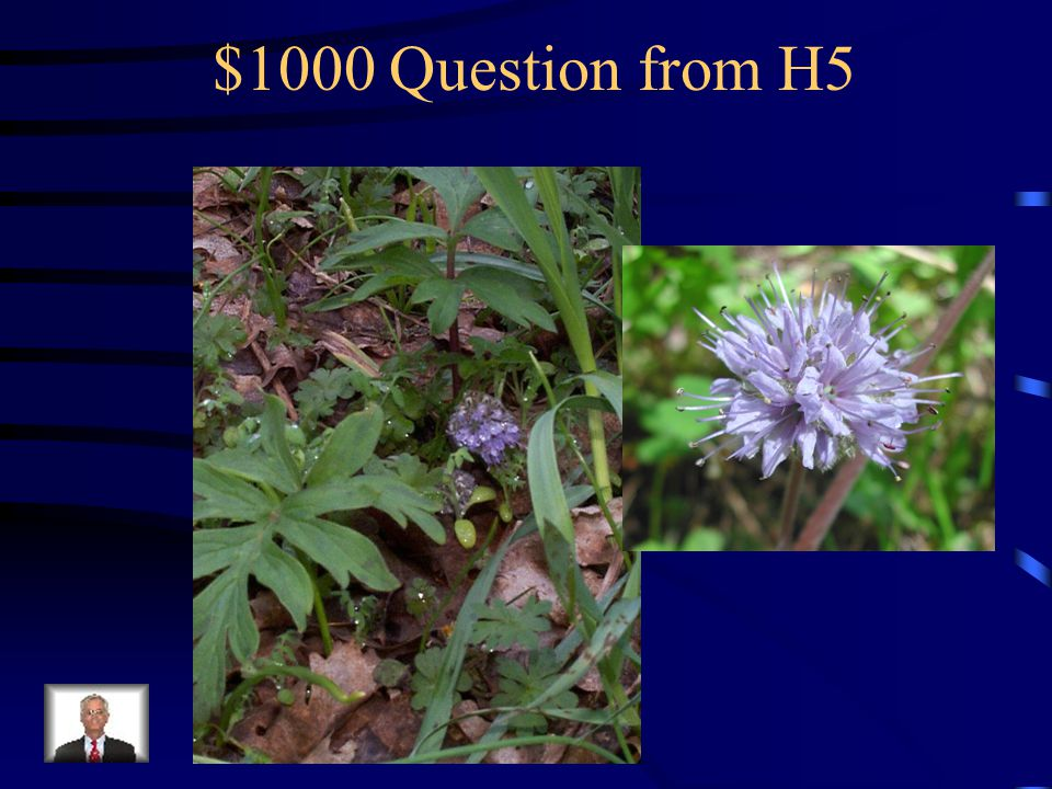 $800 Answer from H5 What are mountain bluebells?