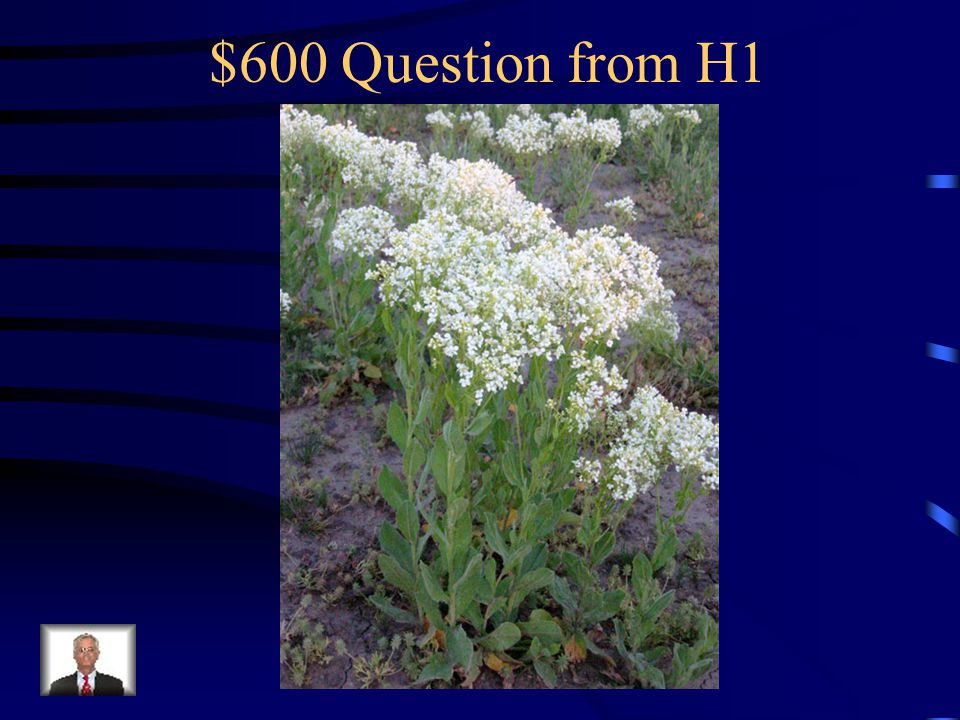 $400 Answer from H1 What is knapweed?