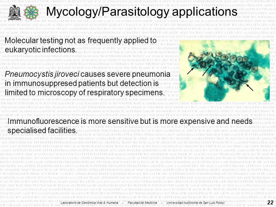 22 Mycology/Parasitology applications Molecular testing not as frequently applied to eukaryotic infections.