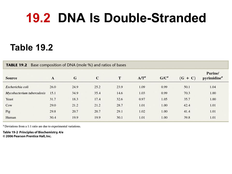 19.2 DNA Is Double-Stranded Table 19.2