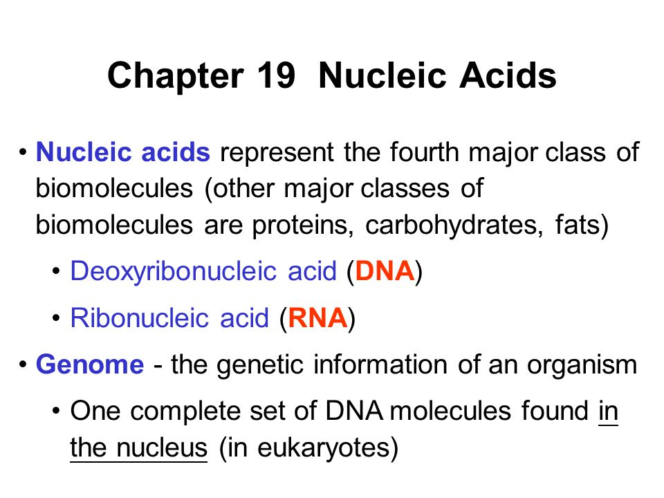 Chapter 19 Nucleic Acids Nucleic acids represent the fourth major class of biomolecules (other major classes of biomolecules are proteins, carbohydrates, fats) Deoxyribonucleic acid (DNA) Ribonucleic acid (RNA) Genome - the genetic information of an organism One complete set of DNA molecules found in the nucleus (in eukaryotes)