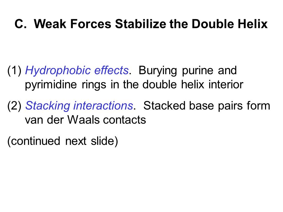 C. Weak Forces Stabilize the Double Helix (1) Hydrophobic effects.