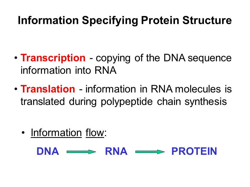 Fig 19.22 Electron micrograph of chromatin Chromatin beads-on-a-string organization