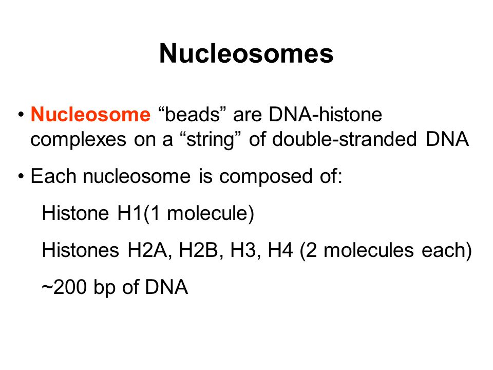 Nucleosomes Nucleosome beads are DNA-histone complexes on a string of double-stranded DNA Each nucleosome is composed of: Histone H1(1 molecule) Histones H2A, H2B, H3, H4 (2 molecules each) ~200 bp of DNA