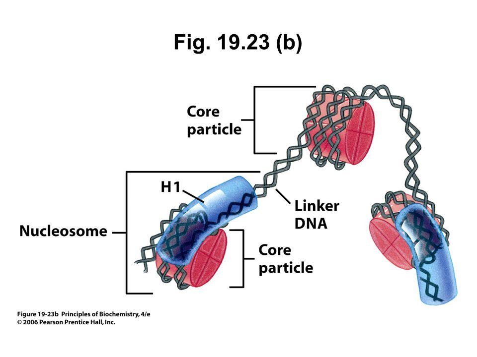 Fig. 19.23 (b)