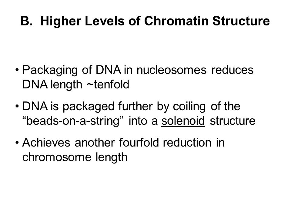 """B. Higher Levels of Chromatin Structure Packaging of DNA in nucleosomes reduces DNA length ~tenfold DNA is packaged further by coiling of the """"beads-o"""