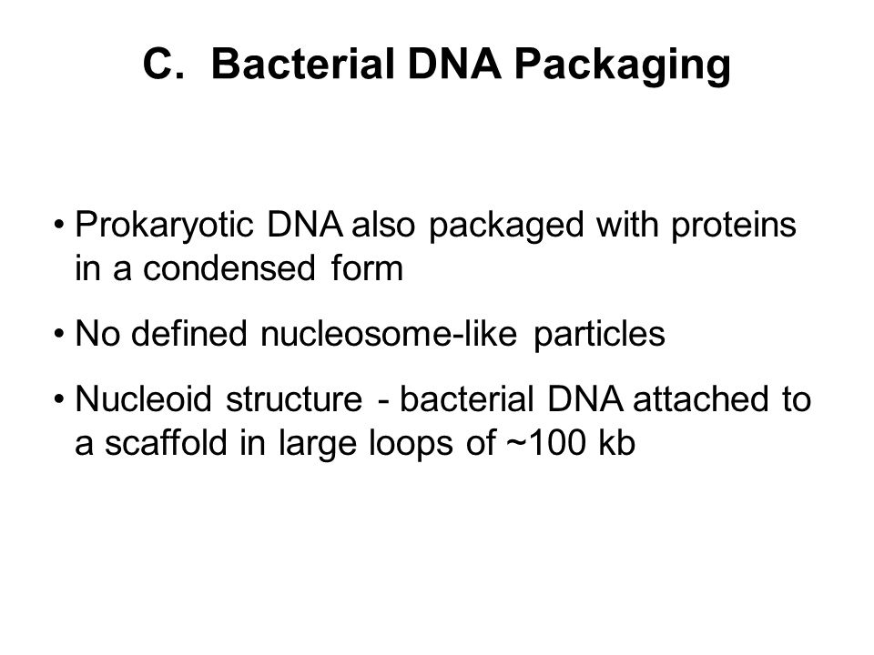 C. Bacterial DNA Packaging Prokaryotic DNA also packaged with proteins in a condensed form No defined nucleosome-like particles Nucleoid structure - b