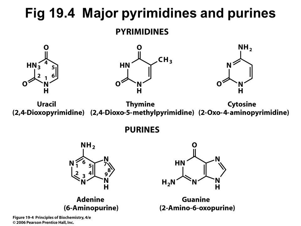 Common Organic Functional Groups