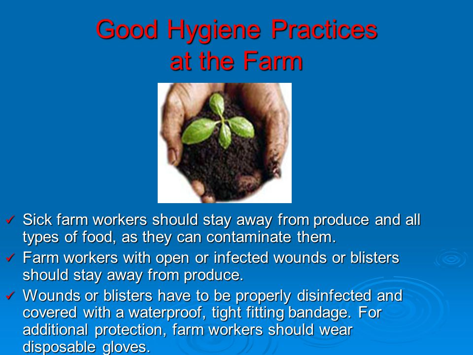 Good Hygiene Practices at the Farm Sick farm workers should stay away from produce and all types of food, as they can contaminate them. Sick farm work