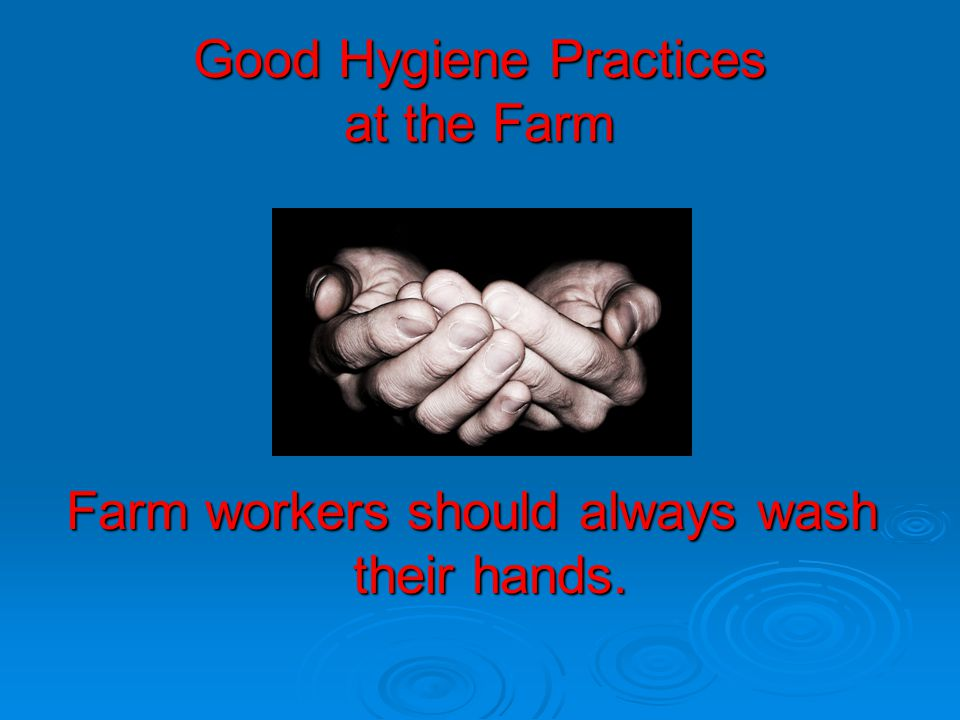 Good Hygiene Practices at the Farm Farm workers should always wash their hands.