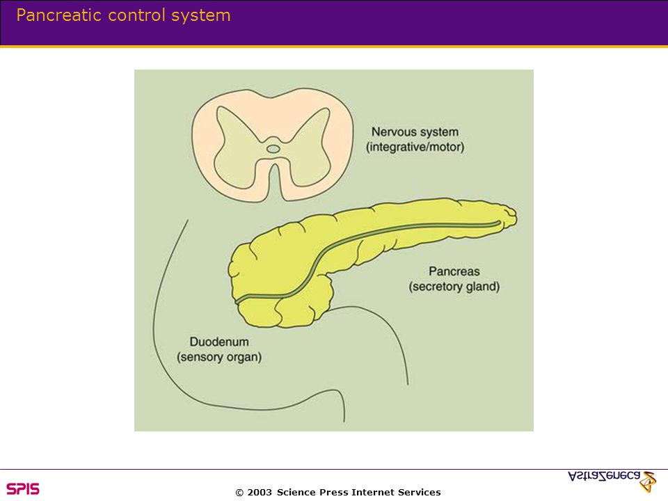 © 2003 Science Press Internet Services Pancreatic control system