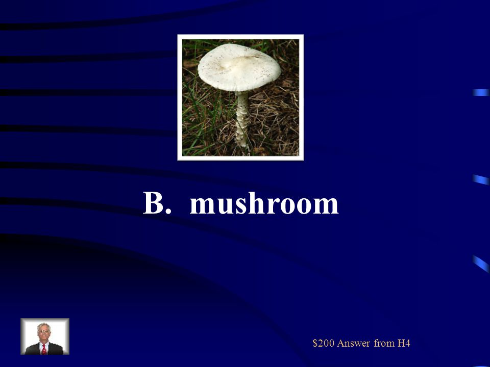 $200 Question from H4 Which of these is NOT a plant A. B. C. D.