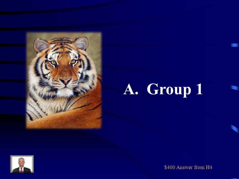 $400 Question from H4 A tiger belongs in which of the above groups.