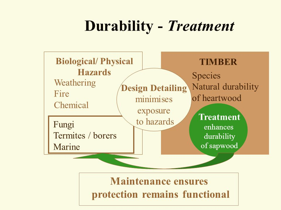 Treatment of timber in PROTECTED ENVIRONMENTS (H1 and H2) All species Secondary elements Primary elements All species Sapwood Excluded No treatment Sapwood allowed H1 treatment for lyctus-susceptible sapwood (NSW, Qld) H2 treatment in termite prone areas where specified Sapwood Excluded No treatment Sapwood allowed H1 treatment for lyctus-susceptible sapwood (NSW, Qld)